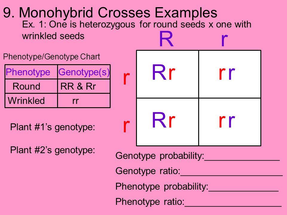 9. Monohybrid Crosses Examples Ex. 1: One is heterozygous for round seeds x one with wrinkled seeds Phenotype/Genotype Chart Genotype probability:____