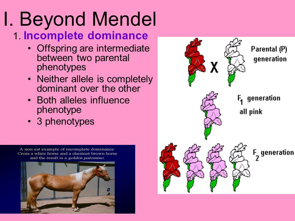 I. Beyond Mendel 1. Incomplete dominance Offspring are intermediate between two parental phenotypes Neither allele is completely dominant over the oth