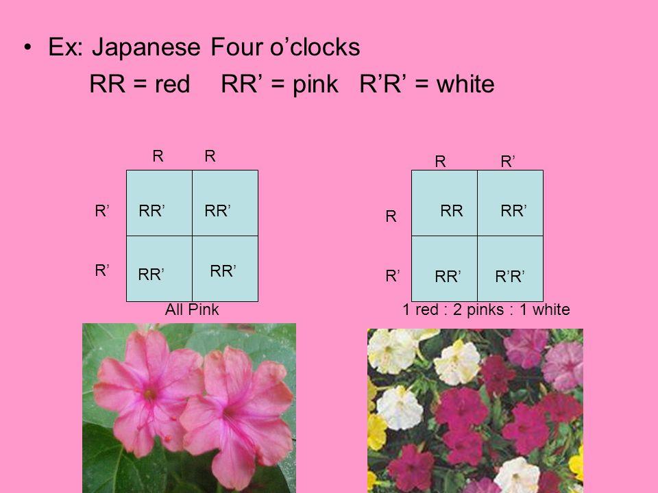 Ex: Japanese Four o'clocks RR = redRR' = pink R'R' = white RR R' RR' R R' RRRR' R'R' All Pink1 red : 2 pinks : 1 white