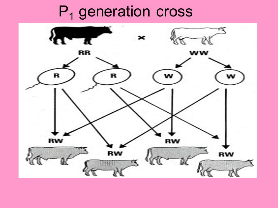 P 1 generation cross