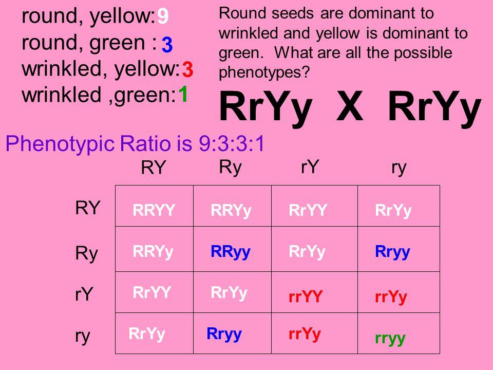 round, yellow: round, green : wrinkled, yellow: wrinkled,green: RY RyrYry RY ry rY Ry RRYYRRYyRrYYRrYy RRYyRrYy RrYYRrYy RRyyRryy rrYYrrYy rryy RrYy X
