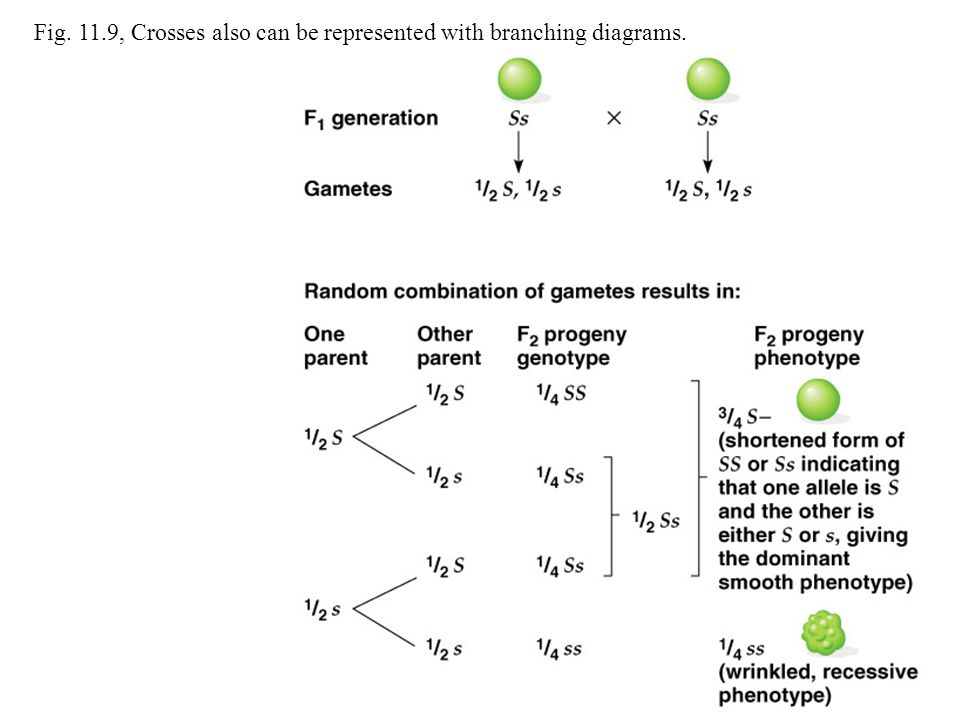 Fig. 11.9, Crosses also can be represented with branching diagrams.
