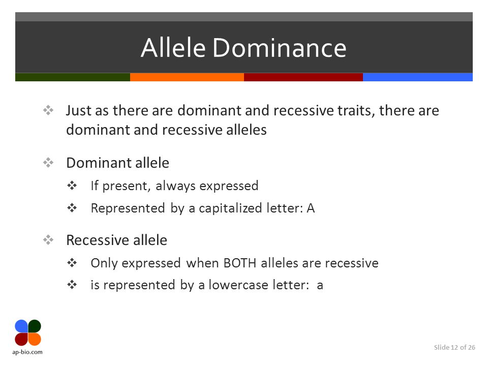 Slide 12 of 26 Allele Dominance  Just as there are dominant and recessive traits, there are dominant and recessive alleles  Dominant allele  If present, always expressed  Represented by a capitalized letter: A  Recessive allele  Only expressed when BOTH alleles are recessive  is represented by a lowercase letter: a