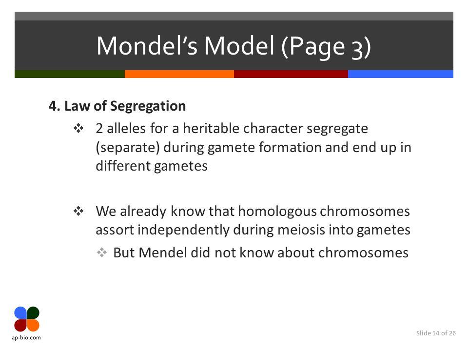 Slide 14 of 26 Mondel's Model (Page 3) 4. Law of Segregation  2 alleles for a heritable character segregate (separate) during gamete formation and en