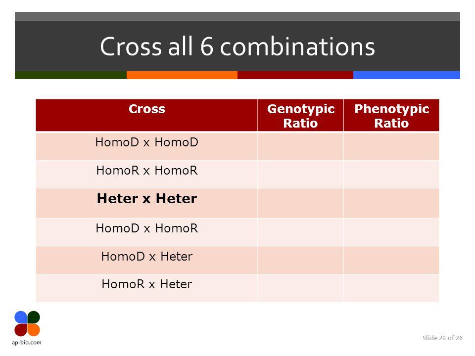 Slide 20 of 26 Cross all 6 combinations CrossGenotypic Ratio Phenotypic Ratio HomoD x HomoD HomoR x HomoR Heter x Heter HomoD x HomoR HomoD x Heter Ho