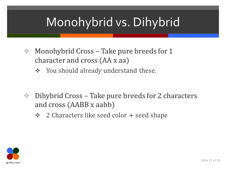 Slide 21 of 26 Monohybrid vs.