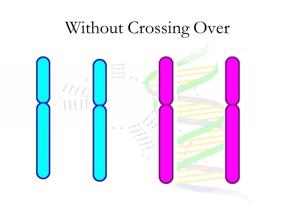 Without Crossing Over