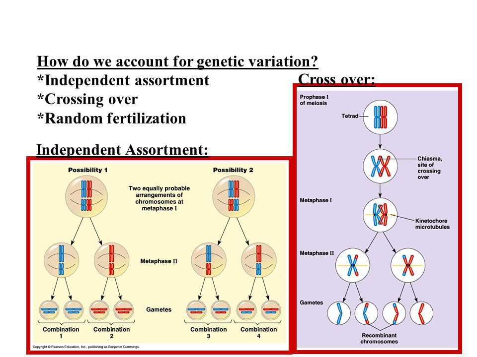 How do we account for genetic variation.