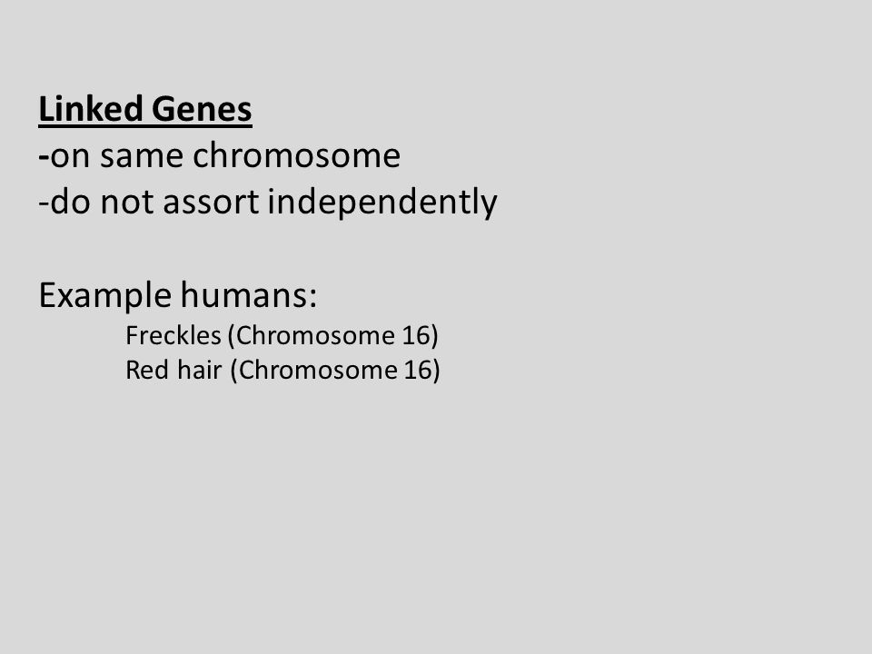 Linked Genes -on same chromosome -do not assort independently Example humans: Freckles (Chromosome 16) Red hair (Chromosome 16)