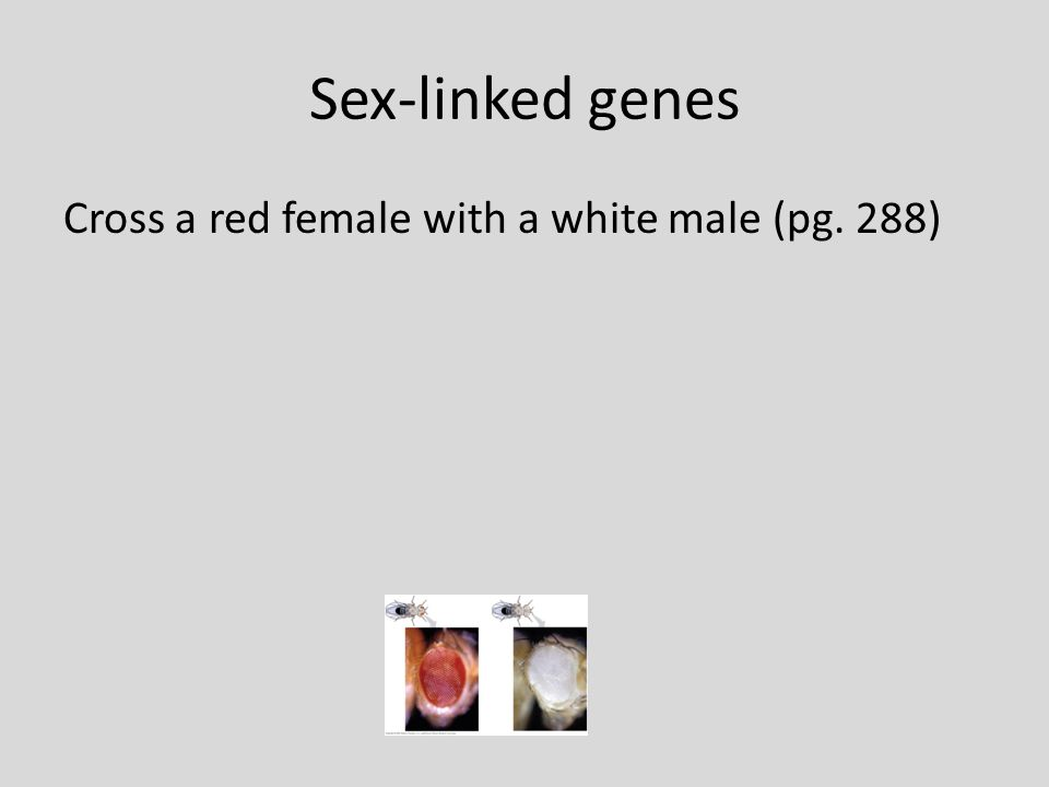 Sex-linked genes Cross a red female with a white male (pg. 288)