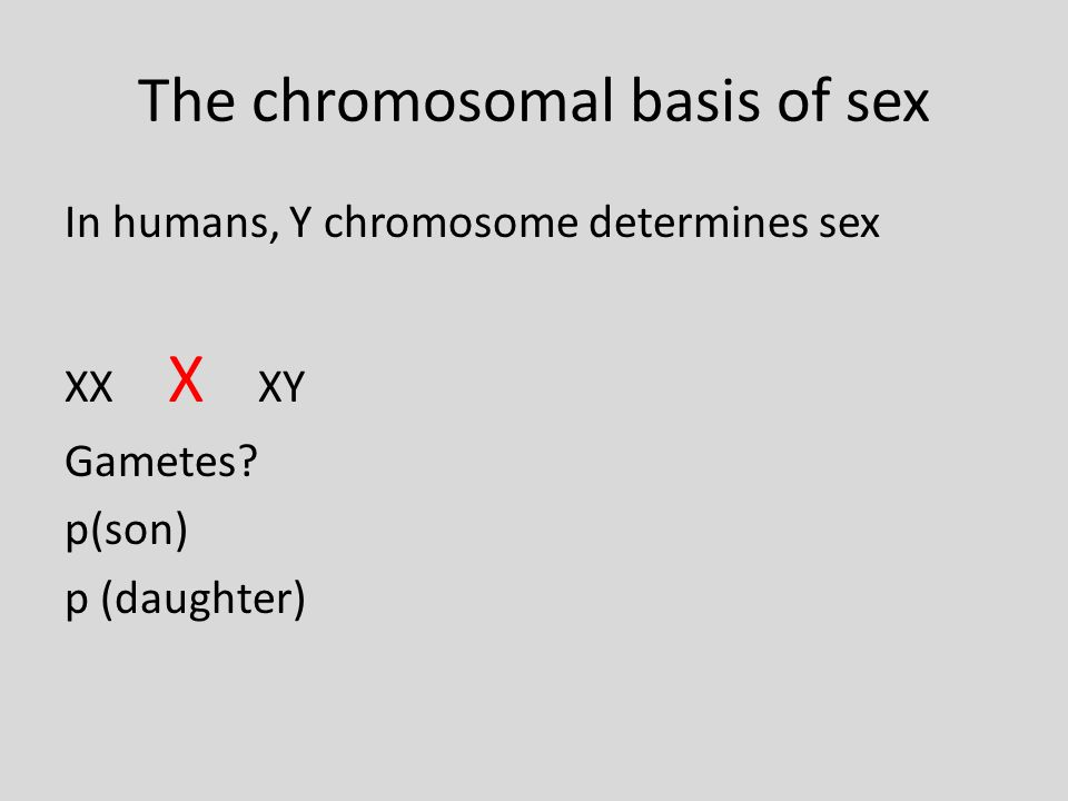 Humans have an X/Y system