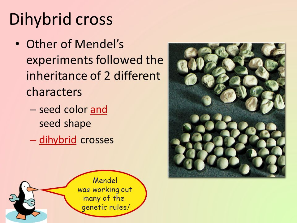 Monohybrid cross Some of Mendel's experiments followed the inheritance of single characters – flower color – seed color – monohybrid crosses
