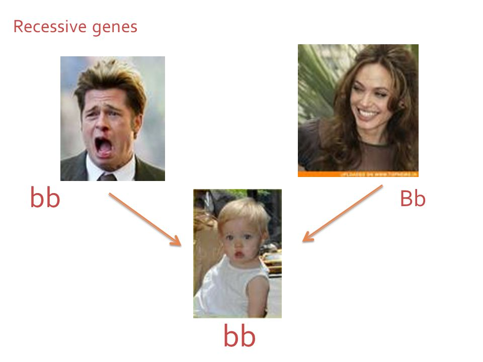 Recessive genes bb Bb bb On this slide who is a heterozygote and who is a homozygote