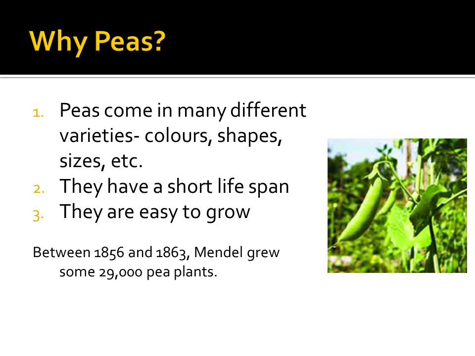 1. Peas come in many different varieties- colours, shapes, sizes, etc.