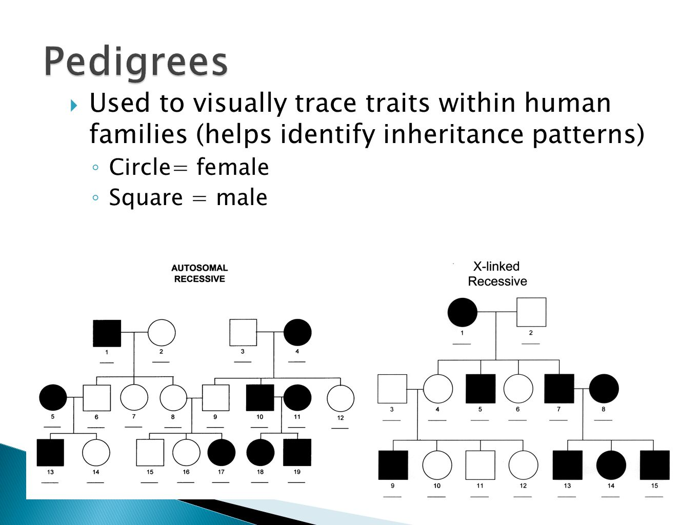  Used to visually trace traits within human families (helps identify inheritance patterns) ◦ Circle= female ◦ Square = male