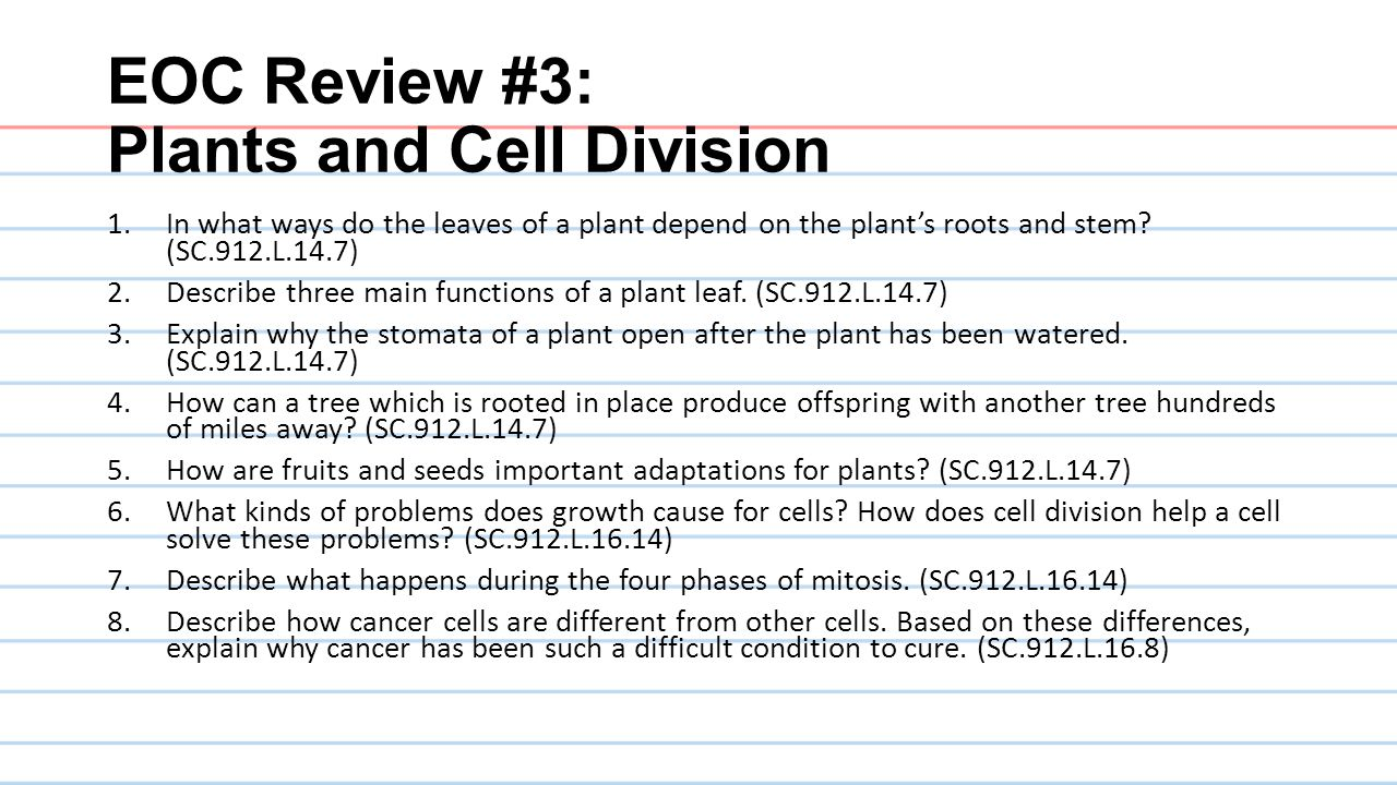 EOC Review #3: Plants and Cell Division 1.In what ways do the leaves of a plant depend on the plant's roots and stem? (SC.912.L.14.7) 2.Describe three