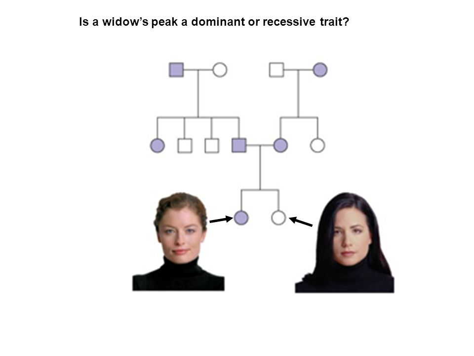Is a widow's peak a dominant or recessive trait?