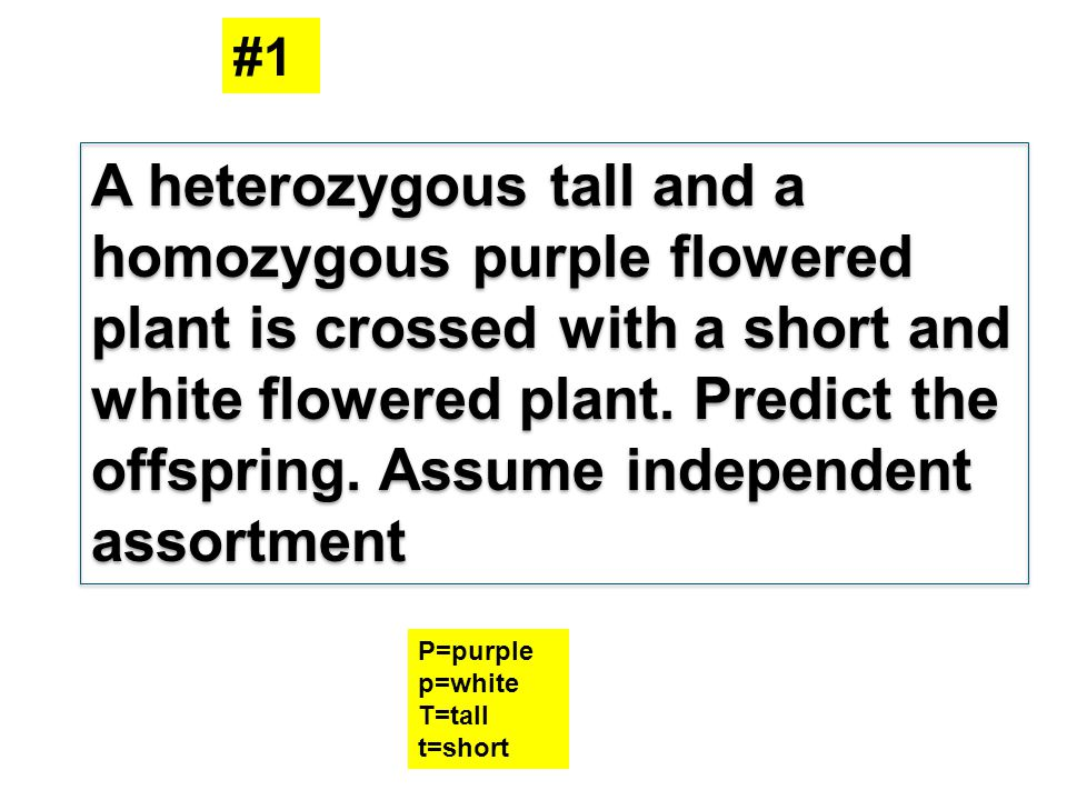 A heterozygous tall and a homozygous purple flowered plant is crossed with a short and white flowered plant. Predict the offspring. Assume independent