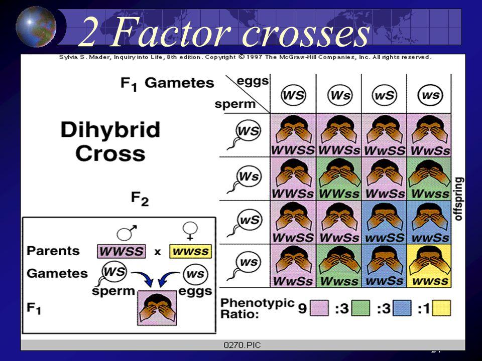 24 2 Factor crosses