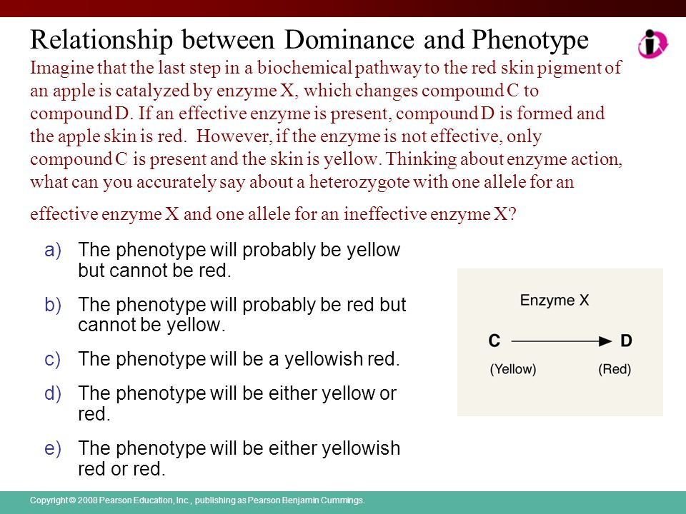 Copyright © 2008 Pearson Education, Inc., publishing as Pearson Benjamin Cummings. Relationship between Dominance and Phenotype Imagine that the last