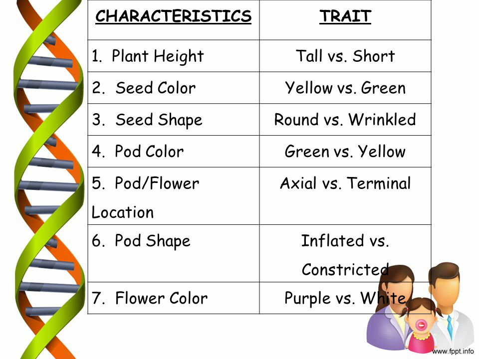 CHARACTERISTICSTRAIT 1. Plant Height Tall vs. Short 2. Seed Color Yellow vs. Green 3. Seed Shape Round vs. Wrinkled 4. Pod Color Green vs. Yellow 5. P
