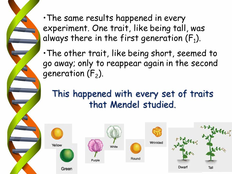 The same results happened in every experiment. One trait, like being tall, was always there in the first generation (F 1 ). The other trait, like bein