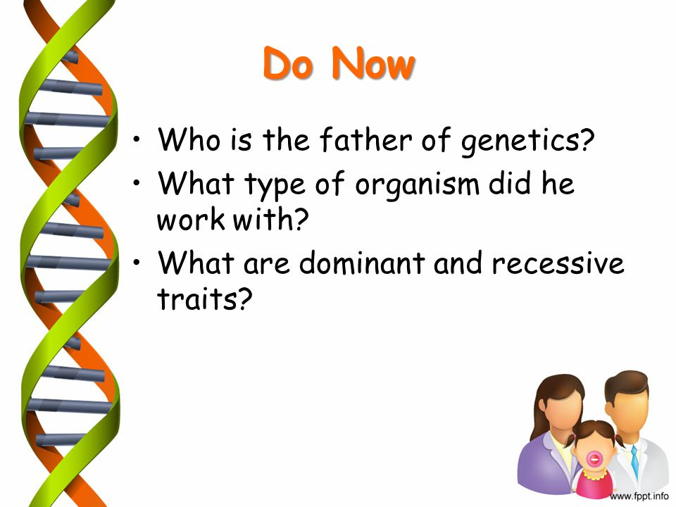 Do Now Who is the father of genetics? What type of organism did he work with? What are dominant and recessive traits?