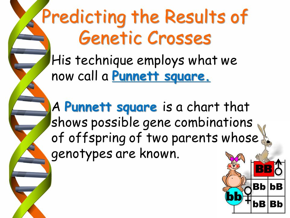 Punnett square. His technique employs what we now call a Punnett square. Punnett square A Punnett square is a chart that shows possible gene combinati
