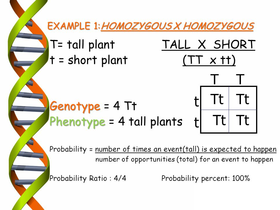 EXAMPLE 1:HOMOZYGOUS X HOMOZYGOUS T= tall plantTALL X SHORT t = short plant (TT x tt) Genotype Genotype = 4 Tt Phenotype Phenotype = 4 tall plants Pro