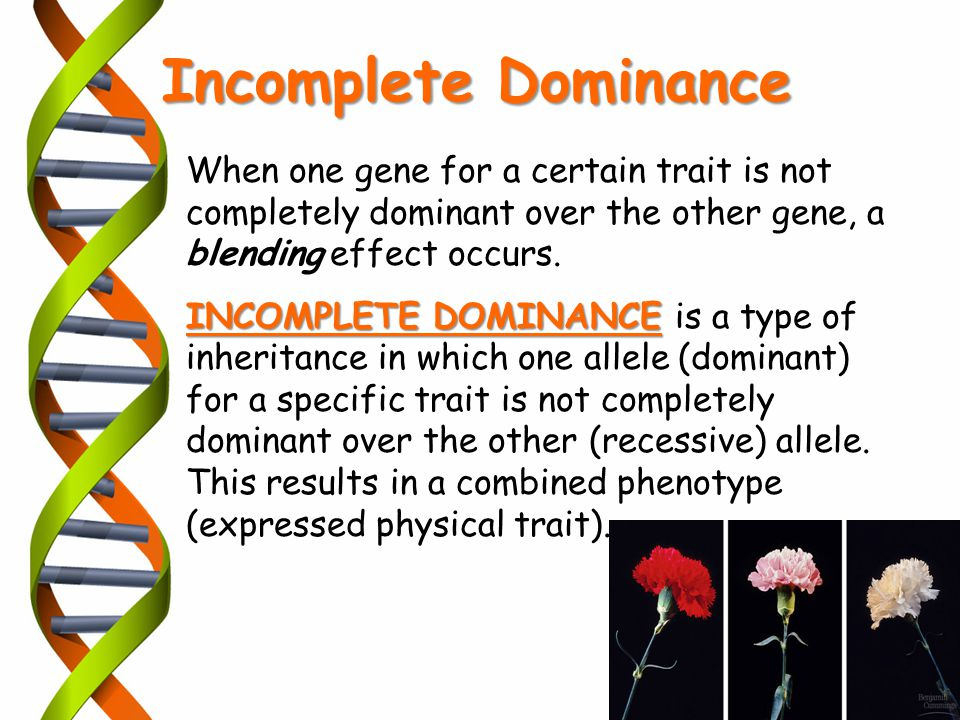When one gene for a certain trait is not completely dominant over the other gene, a blending effect occurs. INCOMPLETE DOMINANCE INCOMPLETE DOMINANCE