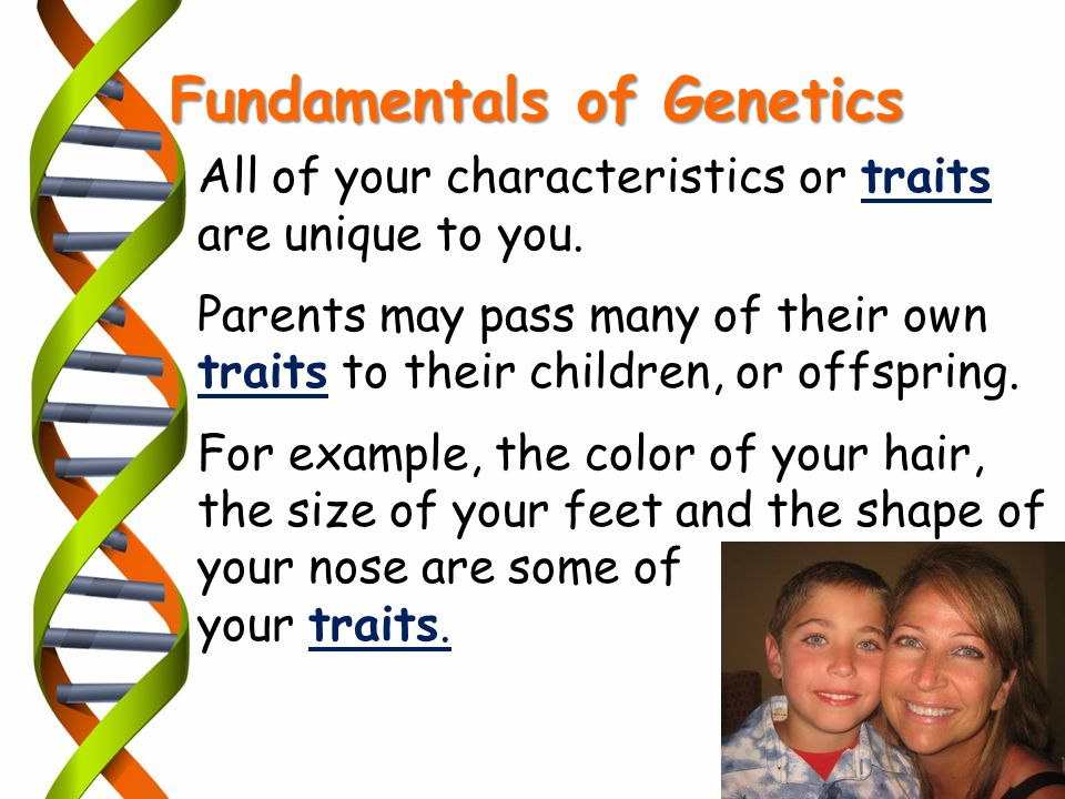 Fundamentals of Genetics All of your characteristics or traits are unique to you. Parents may pass many of their own traits to their children, or offs