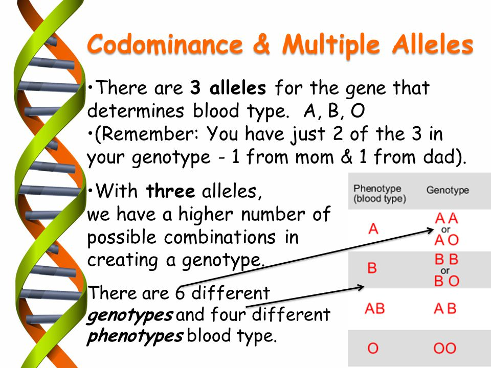 There are 3 alleles for the gene that determines blood type. A, B, O (Remember: You have just 2 of the 3 in your genotype - 1 from mom & 1 from dad).
