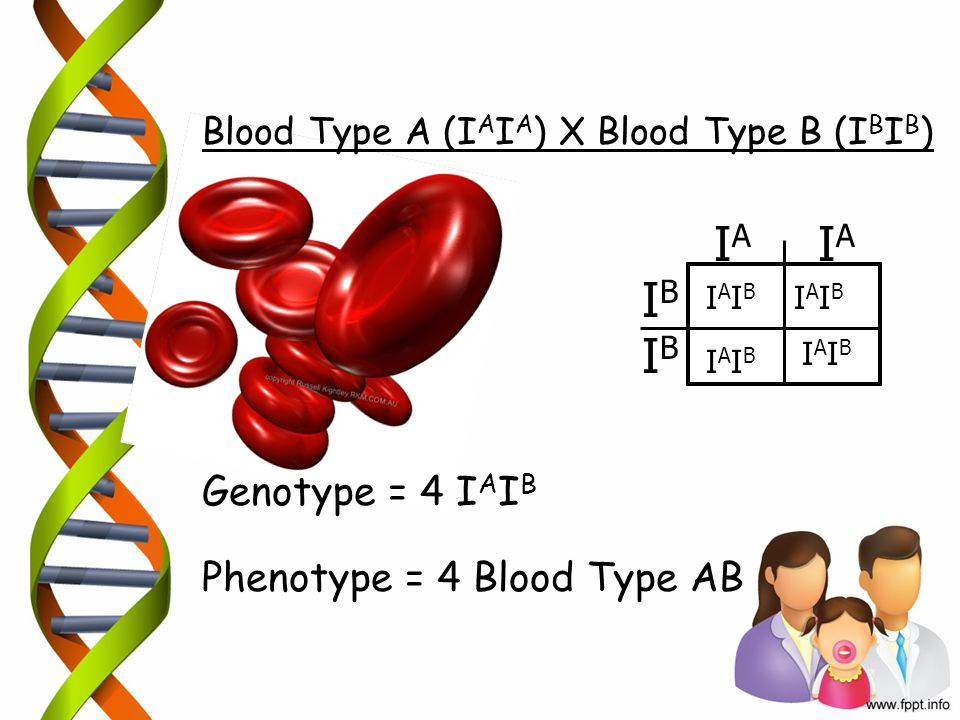 Blood Type A (I A I A ) X Blood Type B (I B I B ) Genotype = 4 I A I B Phenotype = 4 Blood Type AB IAIA IBIB IBIB IAIA IAIBIAIB IAIBIAIB IAIBIAIB IAIB