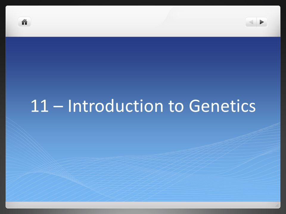 11 – Introduction to Genetics