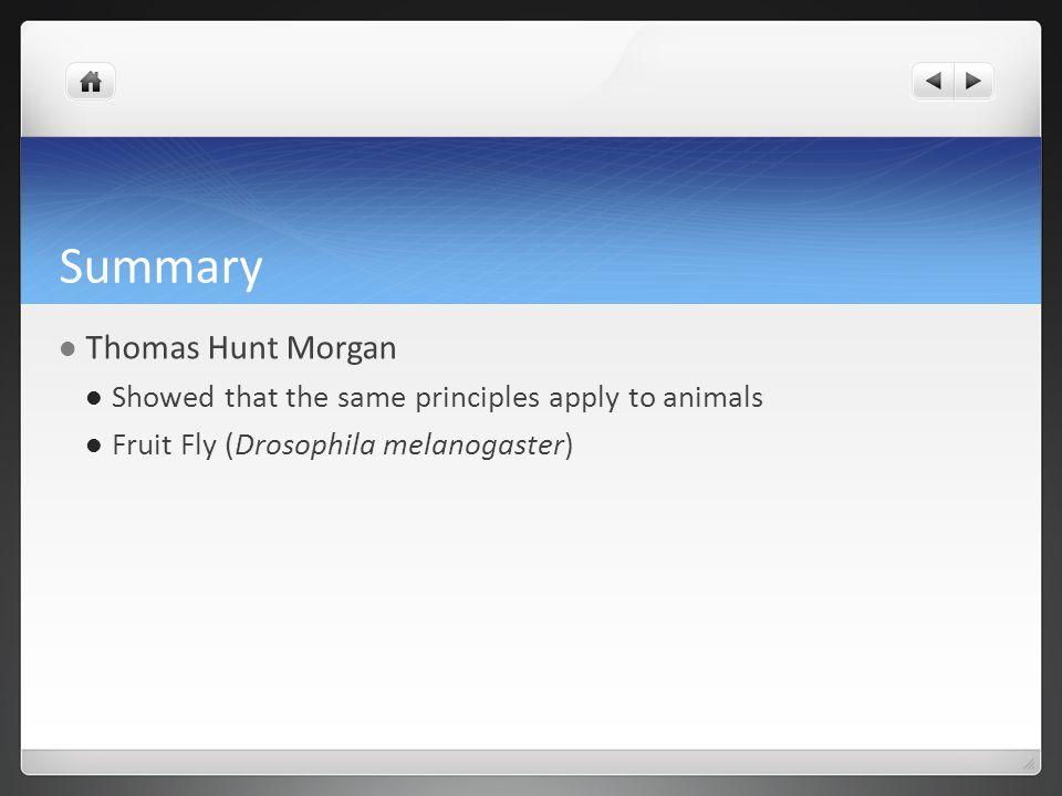 Summary Thomas Hunt Morgan Showed that the same principles apply to animals Fruit Fly (Drosophila melanogaster)