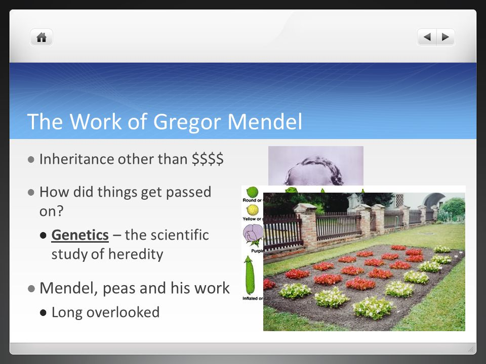 The Work of Gregor Mendel Inheritance other than $$$$ How did things get passed on.