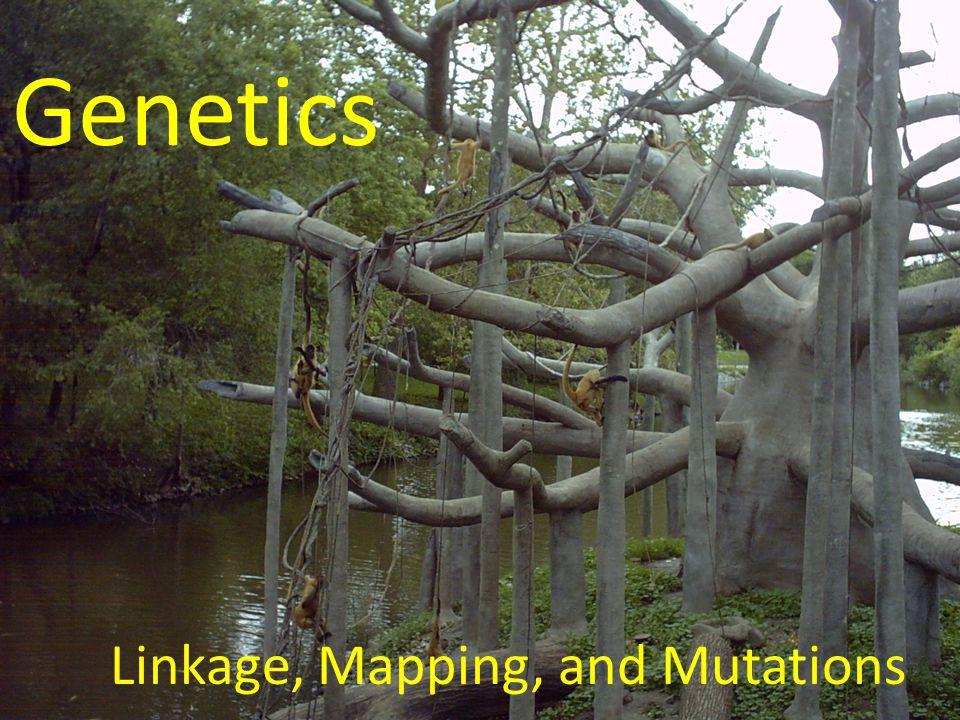 Genetics Linkage, Mapping, and Mutations