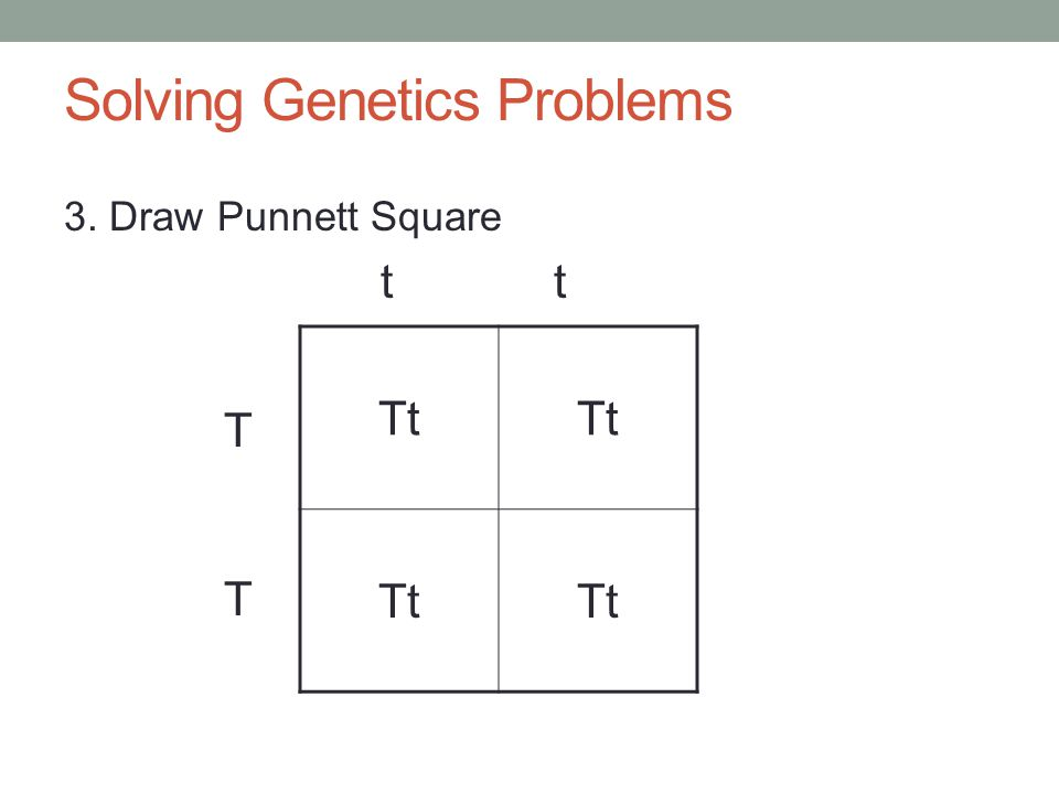 Solving Genetics Problems 3. Draw Punnett Square t t TTTT