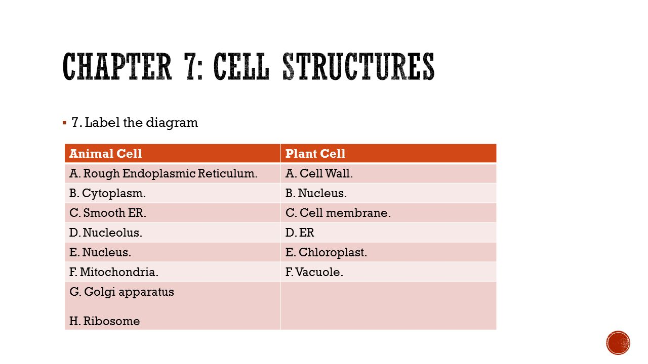  7. Label the diagram Animal CellPlant Cell A. Rough Endoplasmic Reticulum.A. Cell Wall. B. Cytoplasm.B. Nucleus. C. Smooth ER.C. Cell membrane. D. N