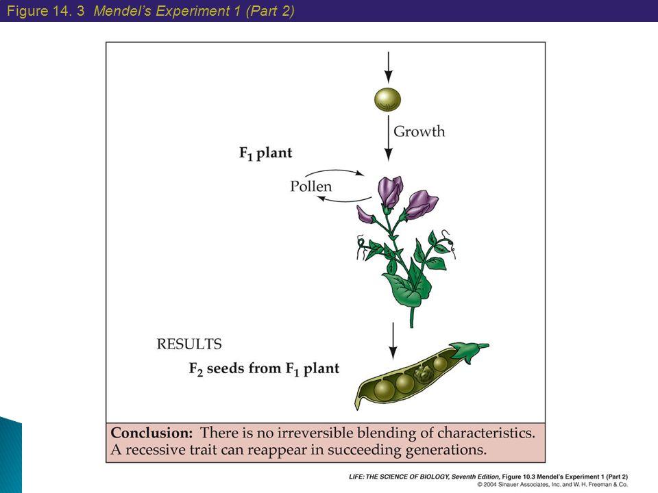 Figure 14. 3 Mendel's Experiment 1 (Part 2)