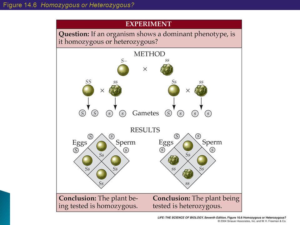 Figure 14.6 Homozygous or Heterozygous?