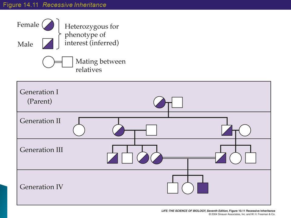 Figure 14.11 Recessive Inheritance
