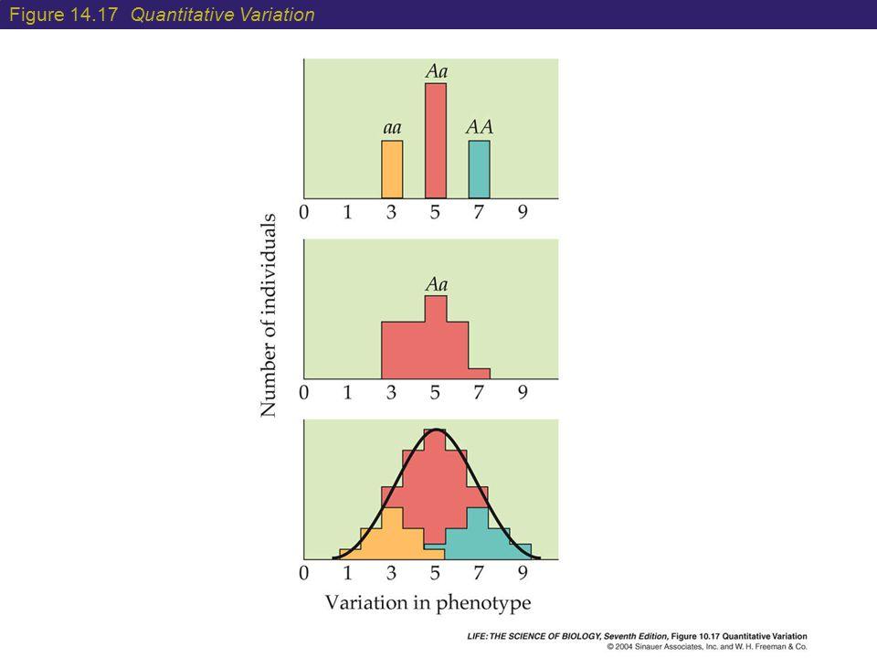 Figure 14.17 Quantitative Variation