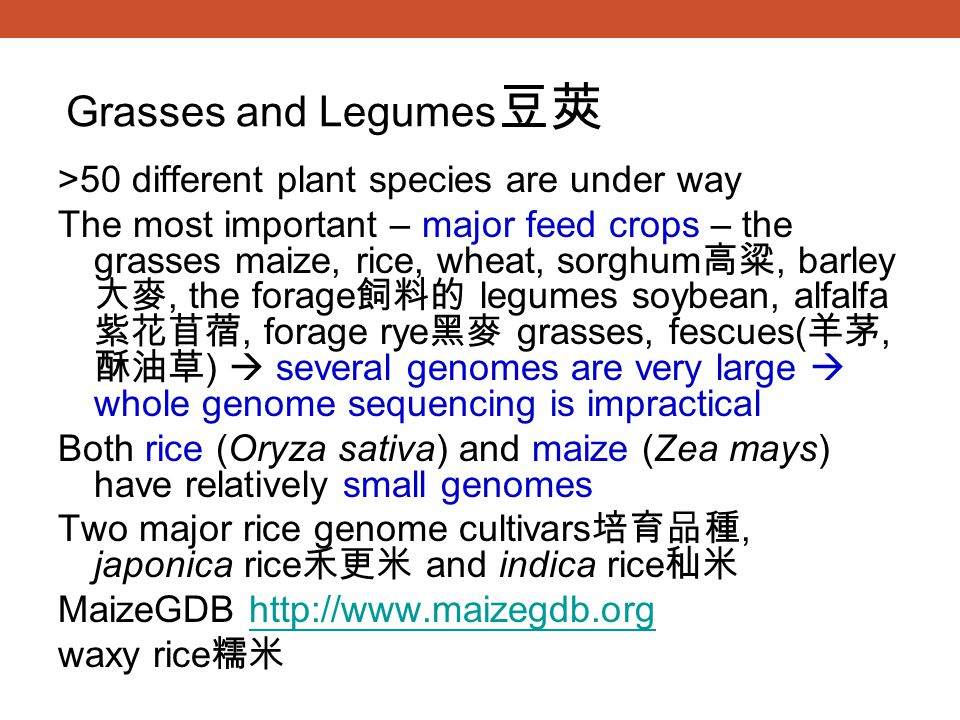 >50 different plant species are under way The most important – major feed crops – the grasses maize, rice, wheat, sorghum 高粱, barley 大麥, the forage 飼料