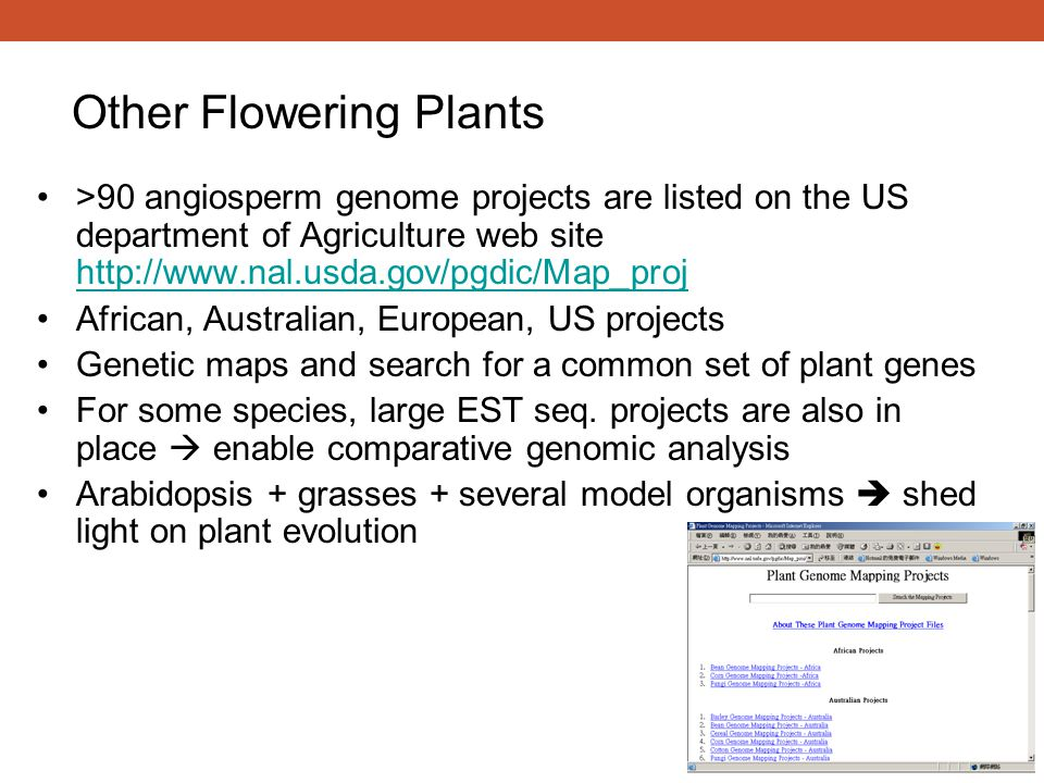 >90 angiosperm genome projects are listed on the US department of Agriculture web site http://www.nal.usda.gov/pgdic/Map_proj http://www.nal.usda.gov/