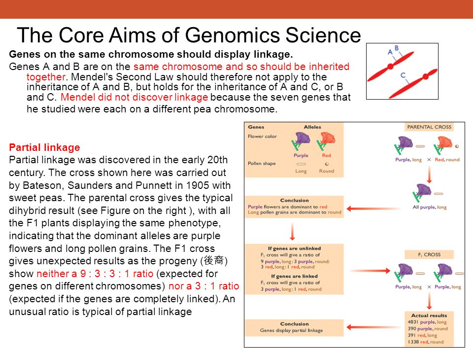 Genes on the same chromosome should display linkage.