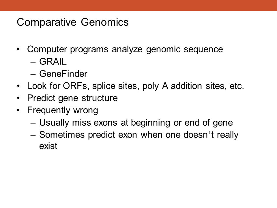 Computer programs analyze genomic sequence –GRAIL –GeneFinder Look for ORFs, splice sites, poly A addition sites, etc. Predict gene structure Frequent