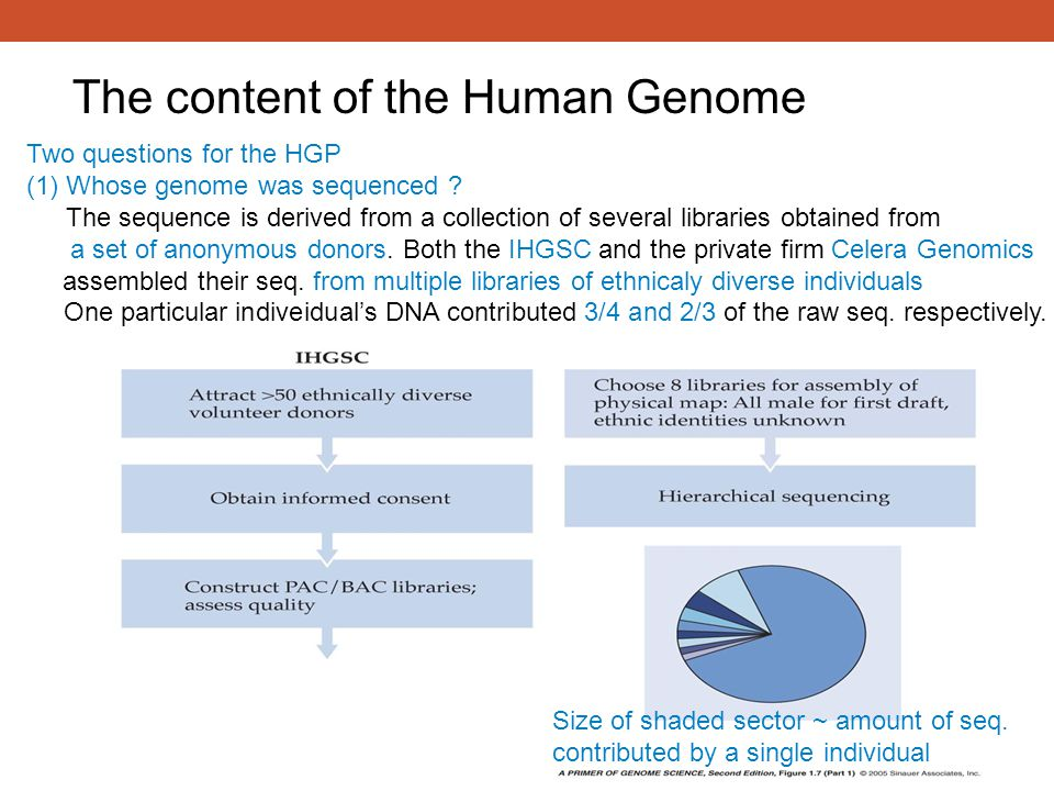 Two questions for the HGP (1)Whose genome was sequenced ? The sequence is derived from a collection of several libraries obtained from a set of anonym