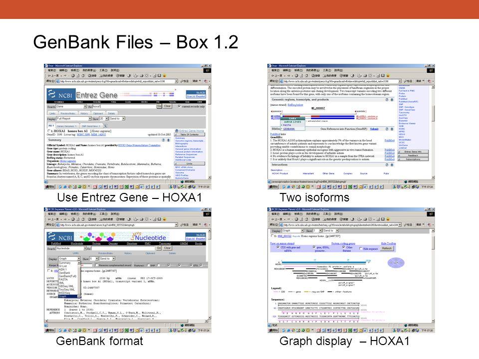 GenBank Files – Box 1.2 Use Entrez Gene – HOXA1Two isoforms GenBank formatGraph display – HOXA1