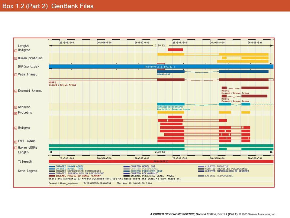 Box 1.2 (Part 2) GenBank Files